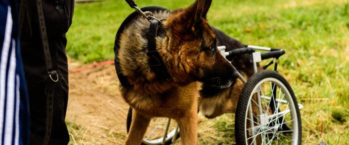 Petcja – emerytury dla zwierząt służbowych!